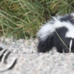 What caption would you give this cute little black & white critter?