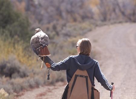 falconer with hawk
