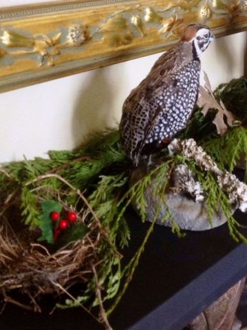 Heritage-Game-Mounts-Christmas-nest