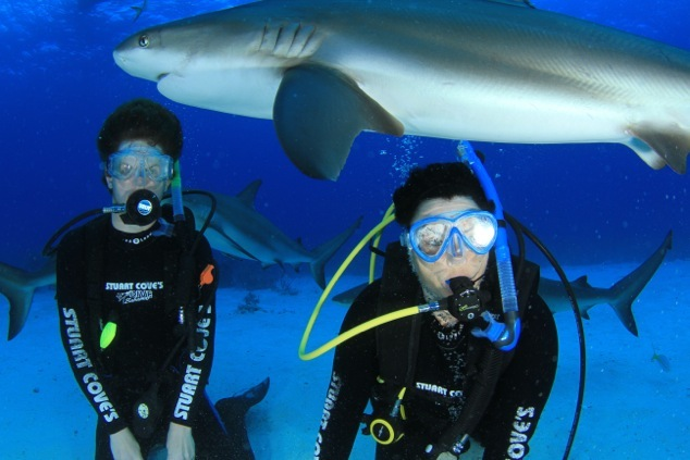 Marcy_Harris-shark