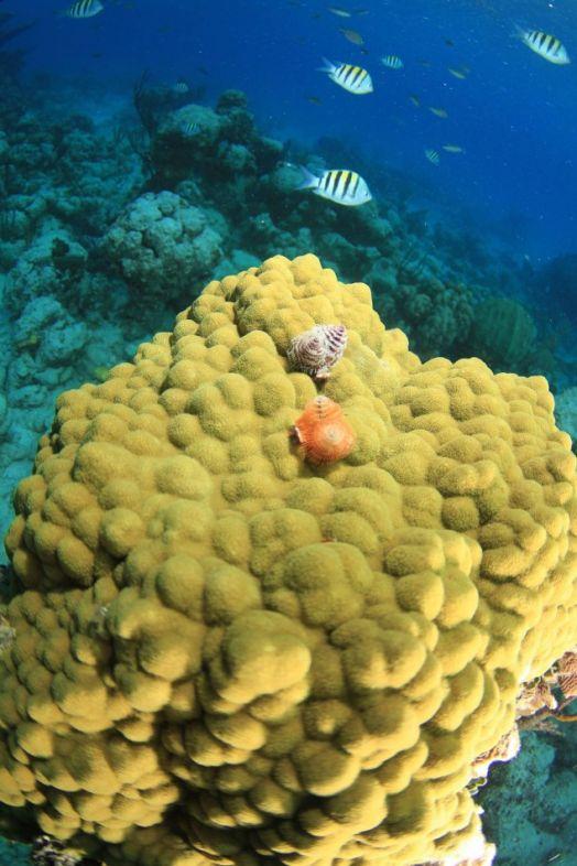 Stuart-Cove-Dive-Bahamas