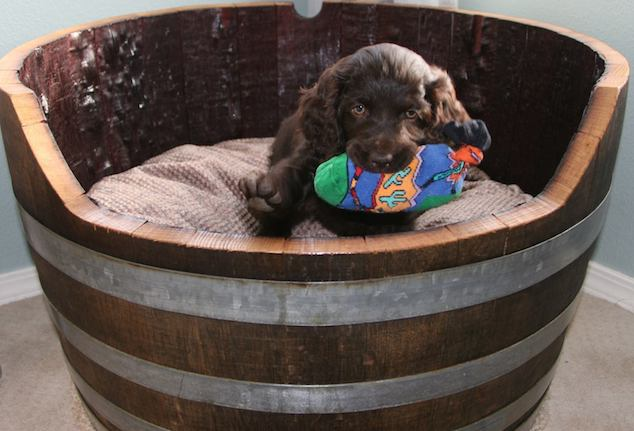 dog-winebarrelbed