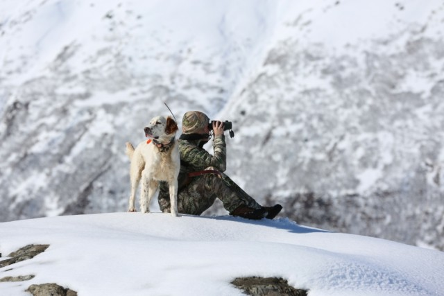 hunting_dog_cogsy_and_cc_2