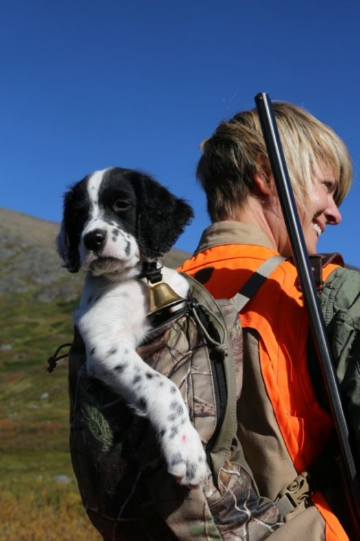 hunting_dog_colt_and_cc