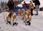 kristy-berington-dog-musher