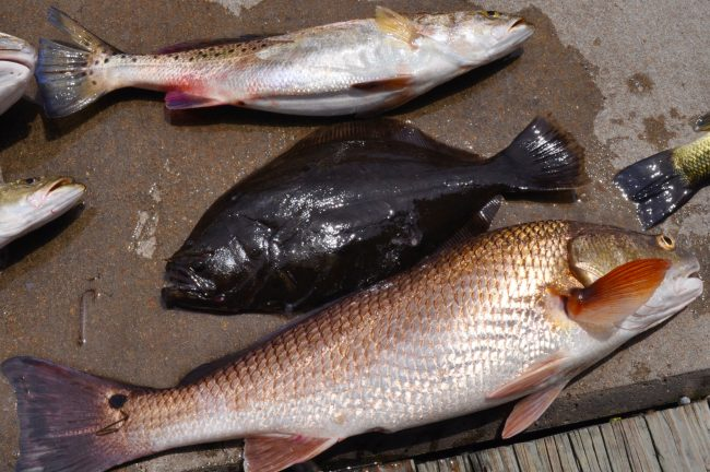 Cajun-Grand-Slam, Fishing Tom Guide Service, Lake Charles