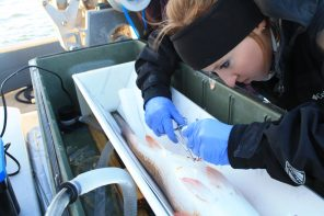 Fish-tagging-woman