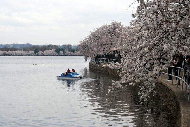 Tidal-Basin-DC-outdoors