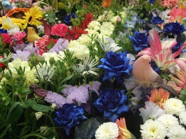 flowers-987831_960_720