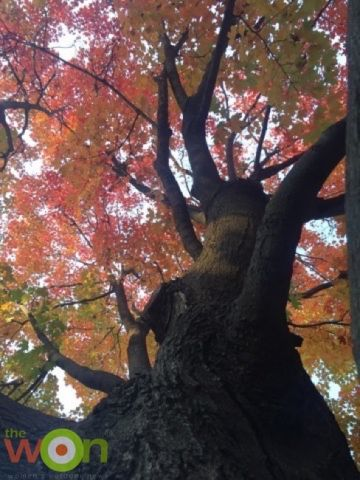 katie-pavlich-fall-tree