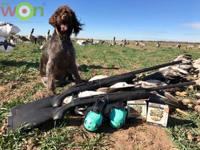 judy-rhodes-dog-geese-hunt