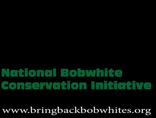 nbci-national-bobwhite-conservation-initiative-bobwhites