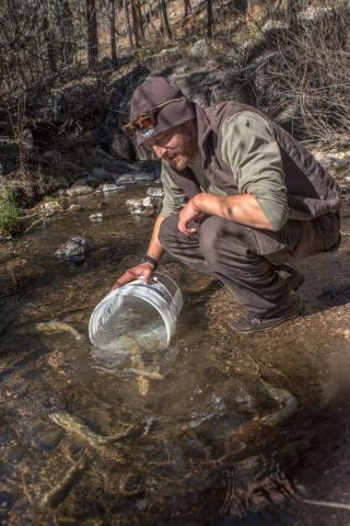 andy-dean-gila-trout-biologist-new-mexico-fish-and-wildlife-conservation-office-releases-gila-trout-into-mineral-creek-photo-craig-springer-usfws-resized