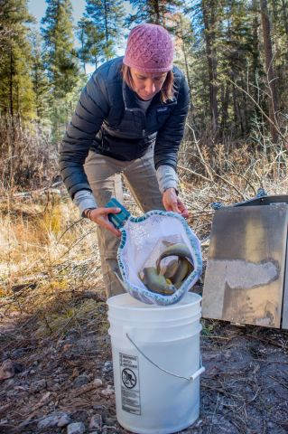 new-mexico-department-of-game-and-fish-gila-trout-biologist-jill-wick-loads-gila-trout-for-dispersal-in-mineral-creek-from-helitank-photo-craig-springer-usfws-resized