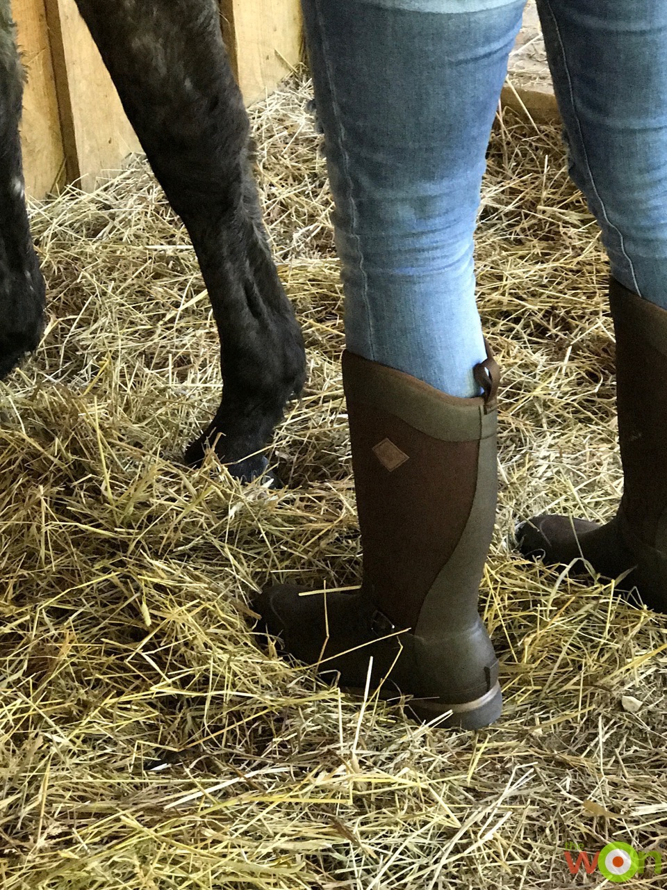 Reign Tall Boots horses
