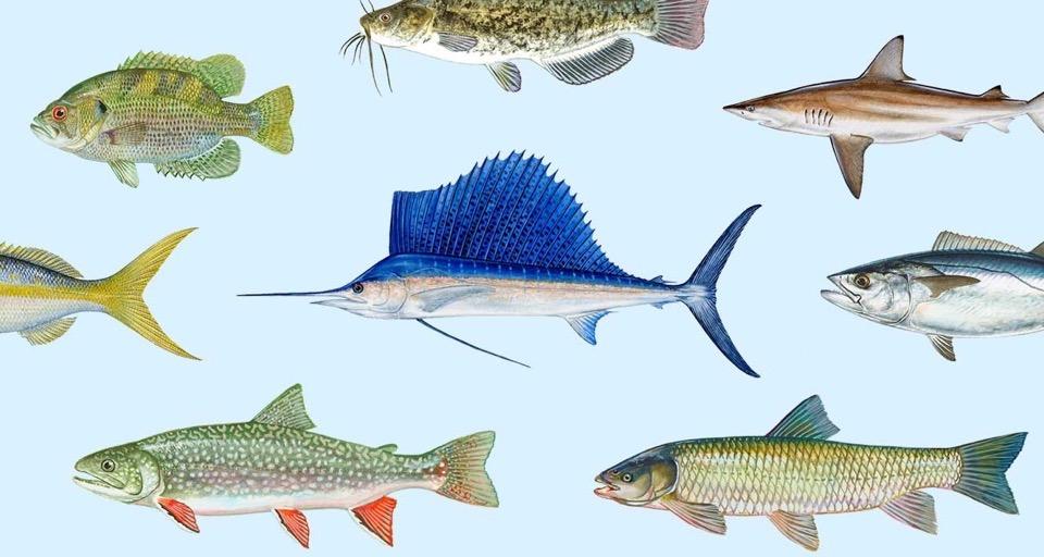 Fishy Personality