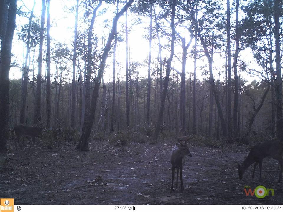 HollisLumpkin_PostRutTactics_AcornFlatBuck Post-Rut Deer Hunting