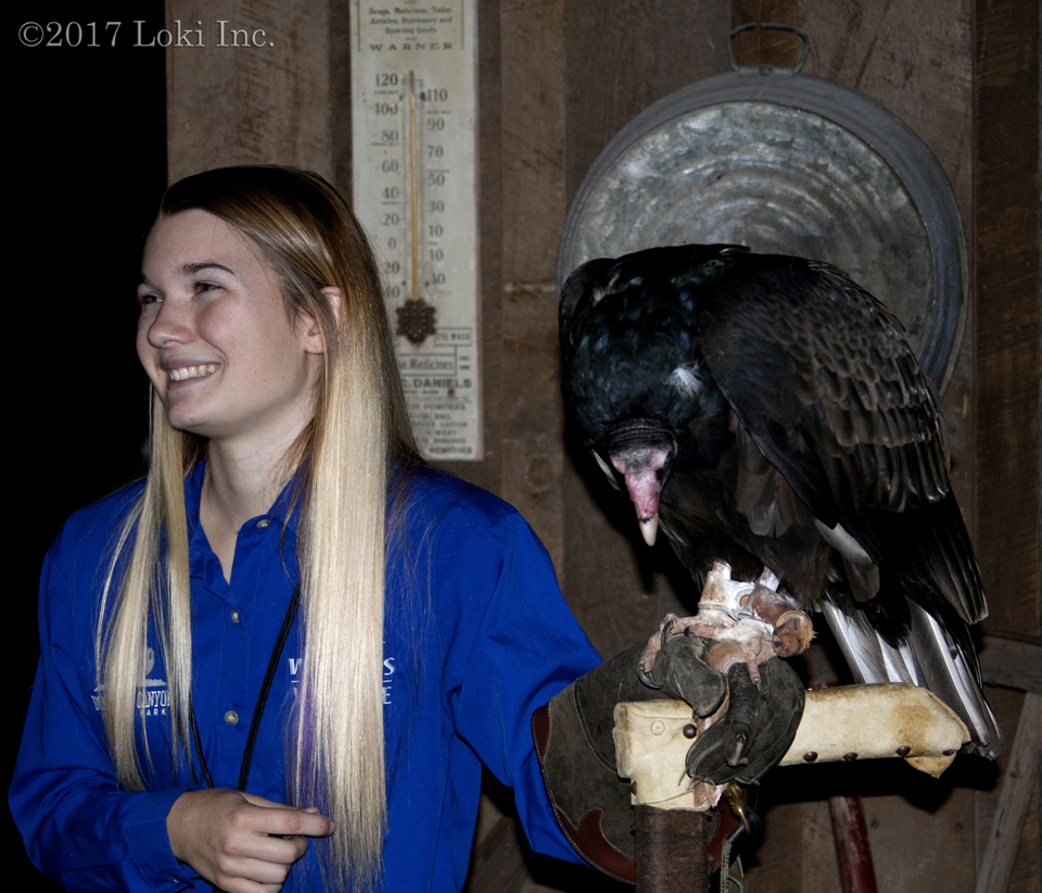 turkey vulture WOW museum