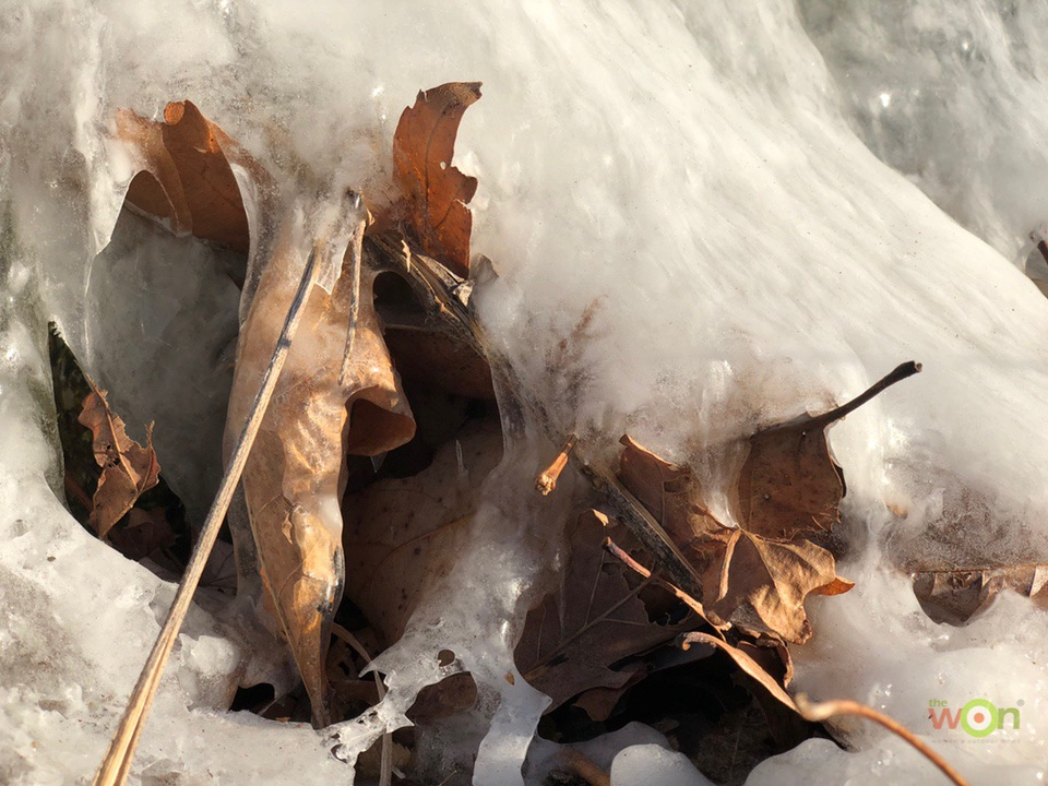Frozen-Leaves-pavlich