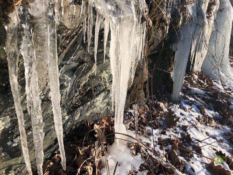 Frozen-Pavlich