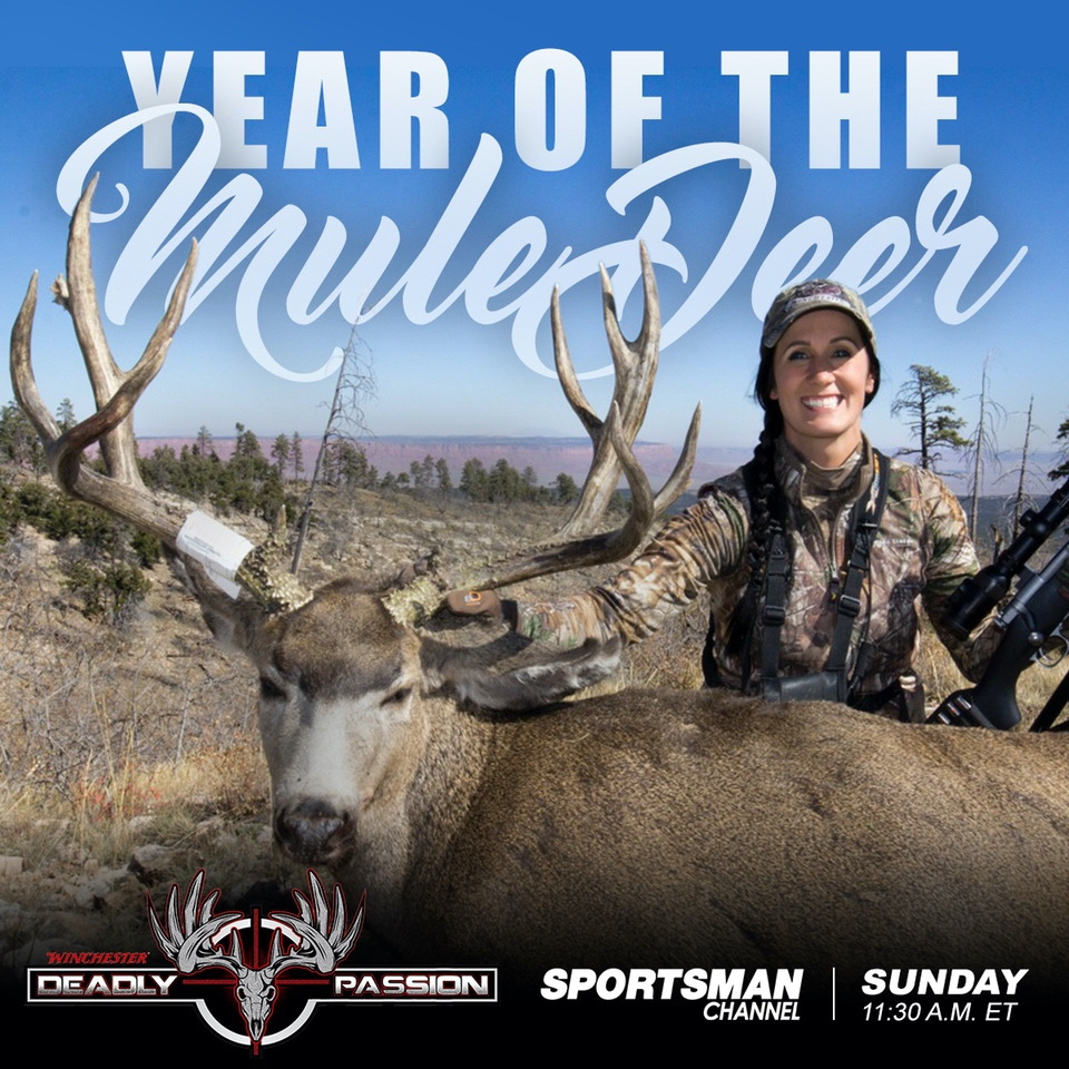 mb-yearofthemuledeer-2 Mule Deer