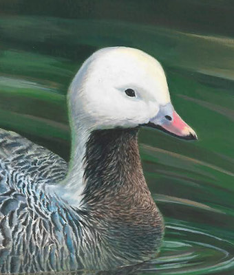 Junior Duck Stamp King painting