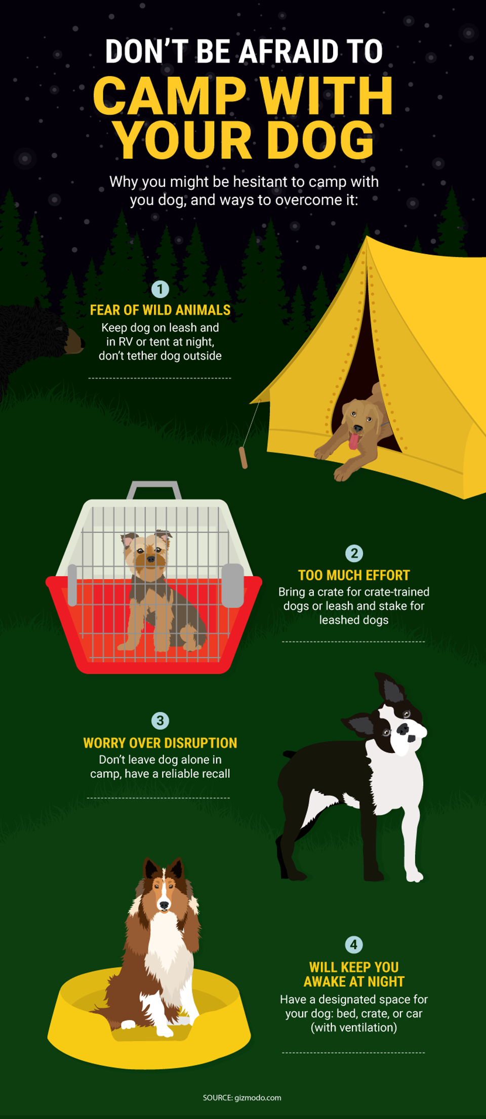 tips for camping with a dog camping dog