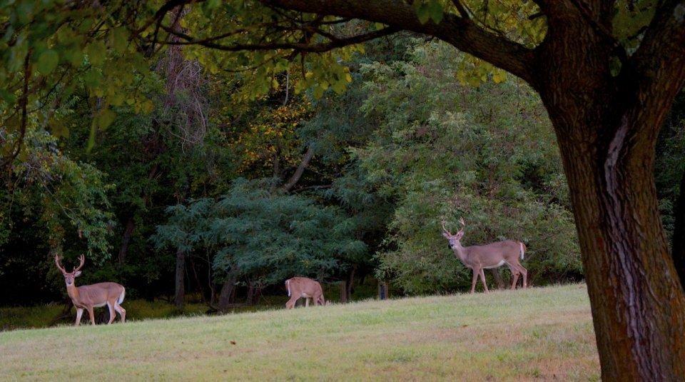 Greenbelt Park NPS national parks
