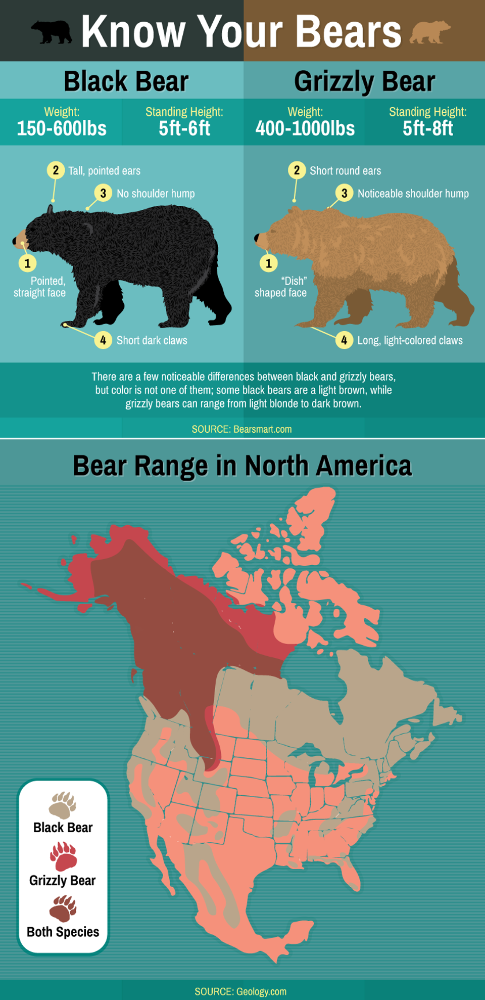 know-your-bear Grizzly bears