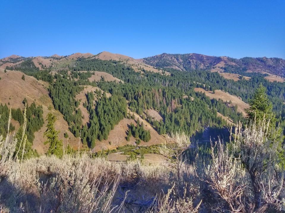 Idaho Elk Hunt AliJuten