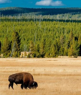 NPF Yellowstone feature