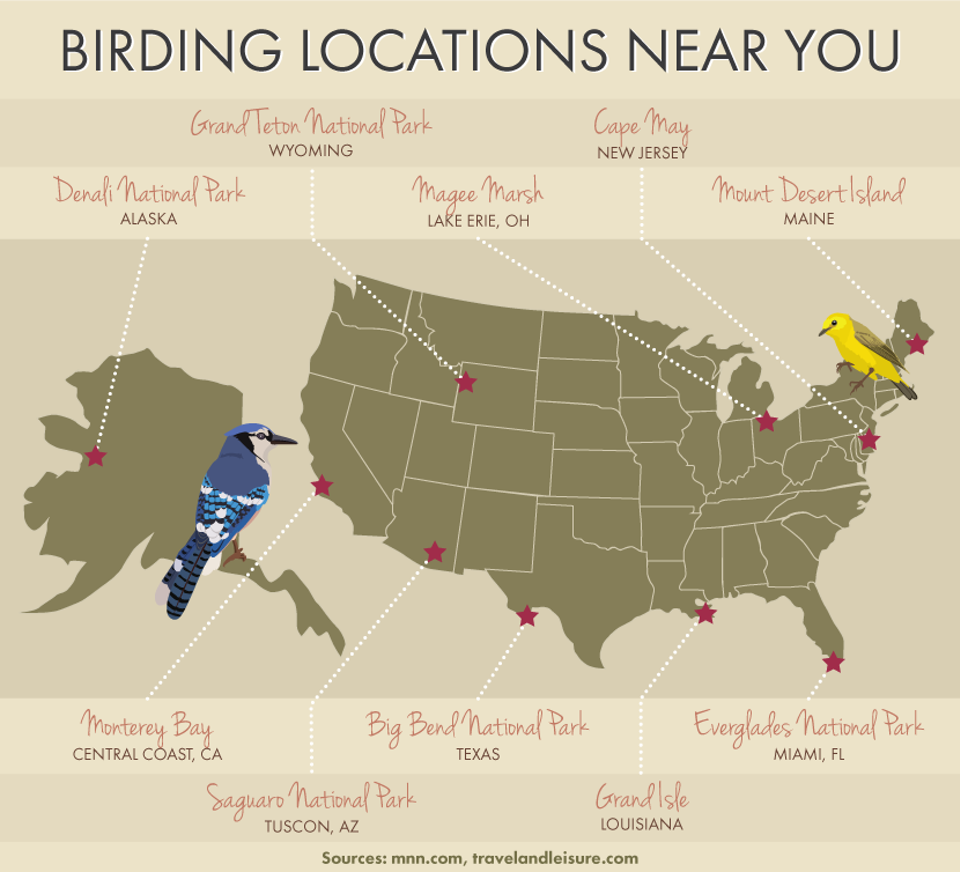 birding locations near you Migrating