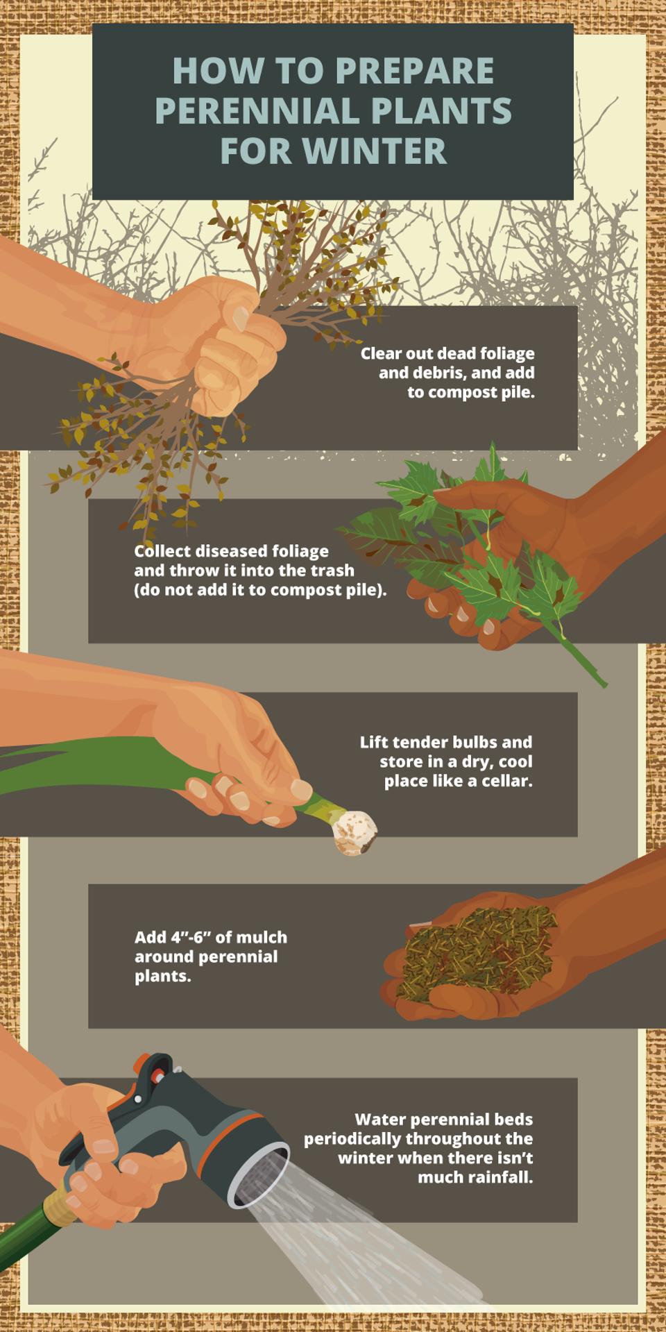 prepare perennials garden for winter