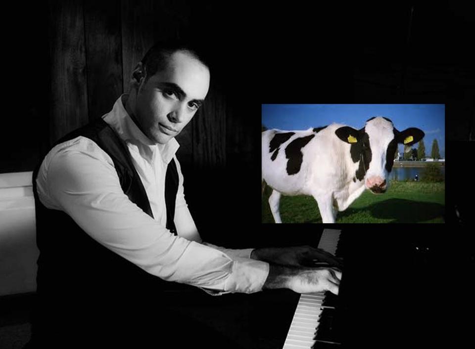 playing piano to a cow Vera Koo Digital Imaging