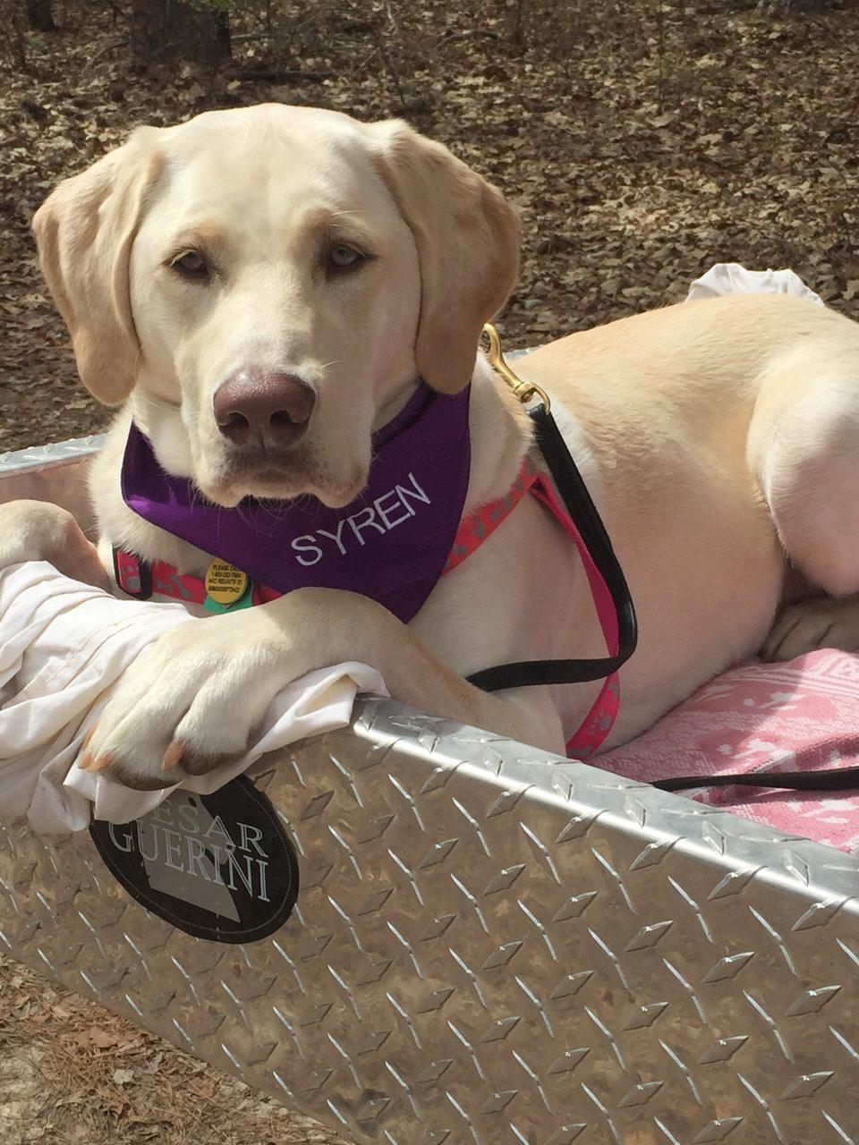 Christine Corkell Syren ProStaffer dog