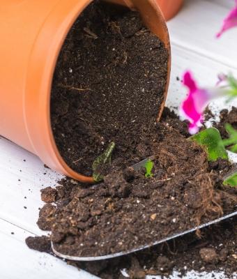 potting soil feature