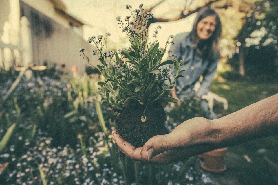 planting Challenging Garden Styles