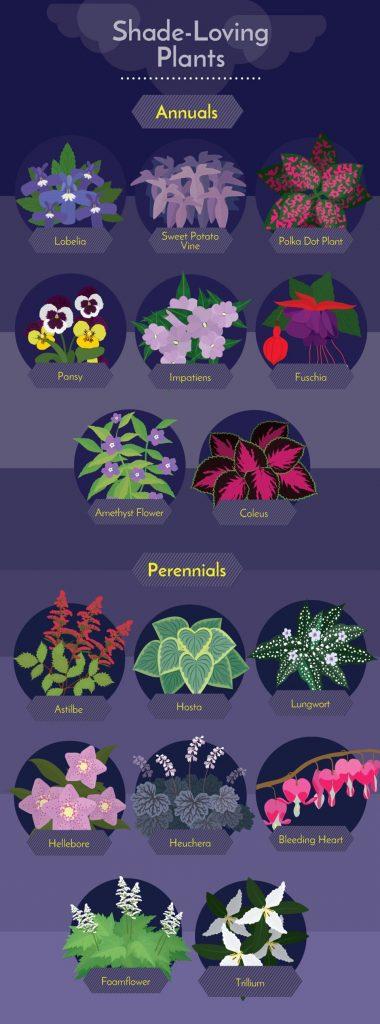 Shade loving plants Challenging Garden Styles