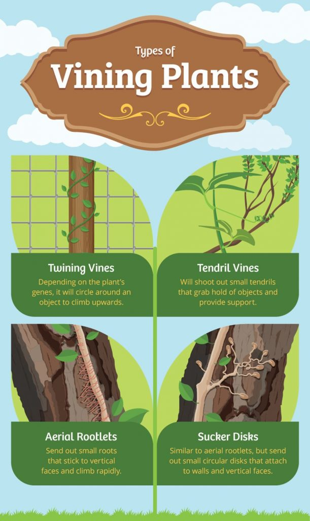 gardening vines FIX.com: A Simple Guide to Gardening with Vines