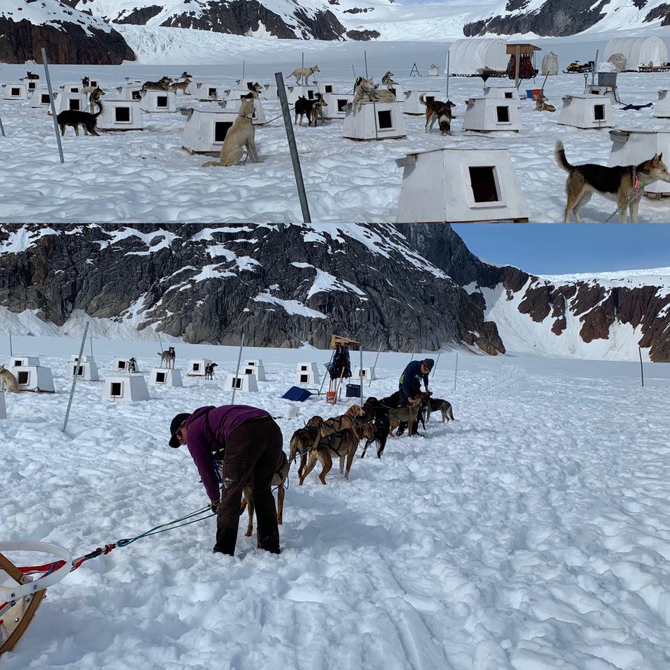 Vera Koo Sightseeing in Alaska   Alaskan huskies Herbert Glacier