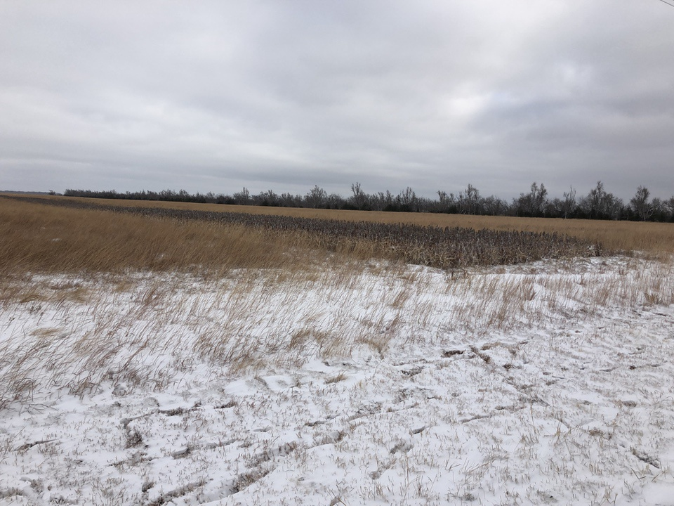 CRP Fields  Upland Bird Habitat Buffer Initiative
