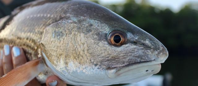 Saltwater fishing TakeMeFishing.org
