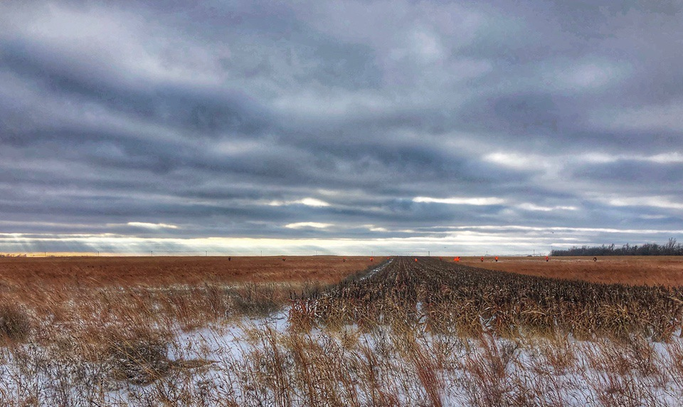 Upland Bird Habitat Buffer Initiative CRP Fields
