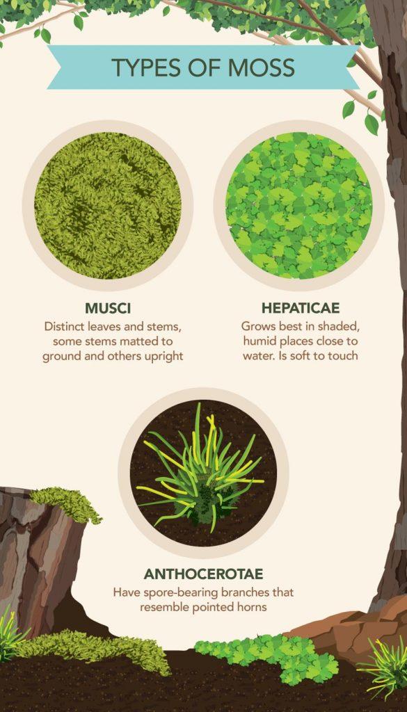 Moss in Your Garden