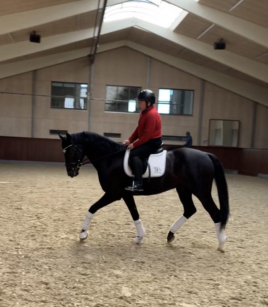 Perfect Athlete dressage horse