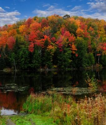 Fall fishing spots autumn trees