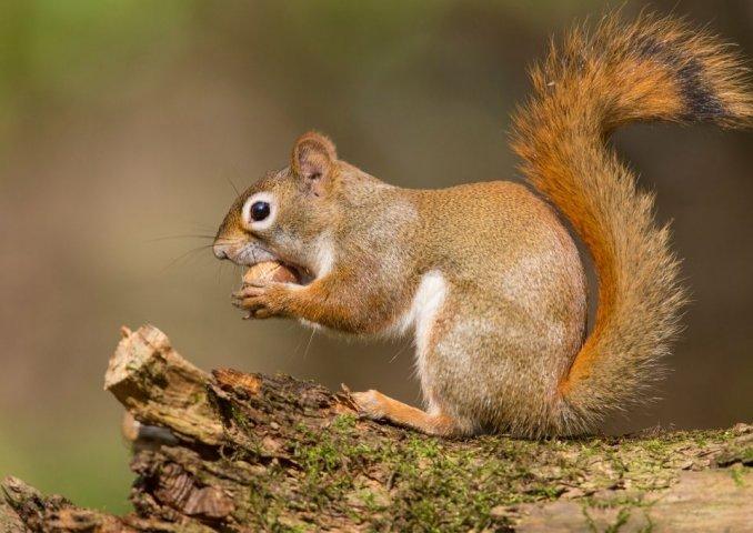 Hunting Squirrels in Appalachia