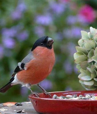Happy DIY Home: 19 Ways to Make Your Backyard Bird Friendly feature