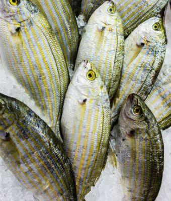Freeze Fresh Fish Feature