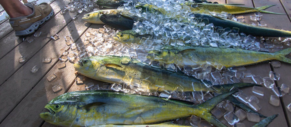 How-to-freeze-fresh-fish TakeMeFishing.org